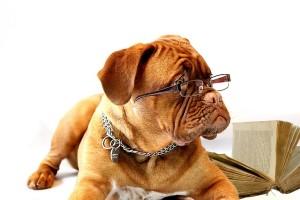 image-study-dog